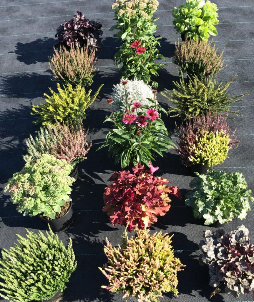 Mooi! Najaarsassortiment bij VW Tuinplanten