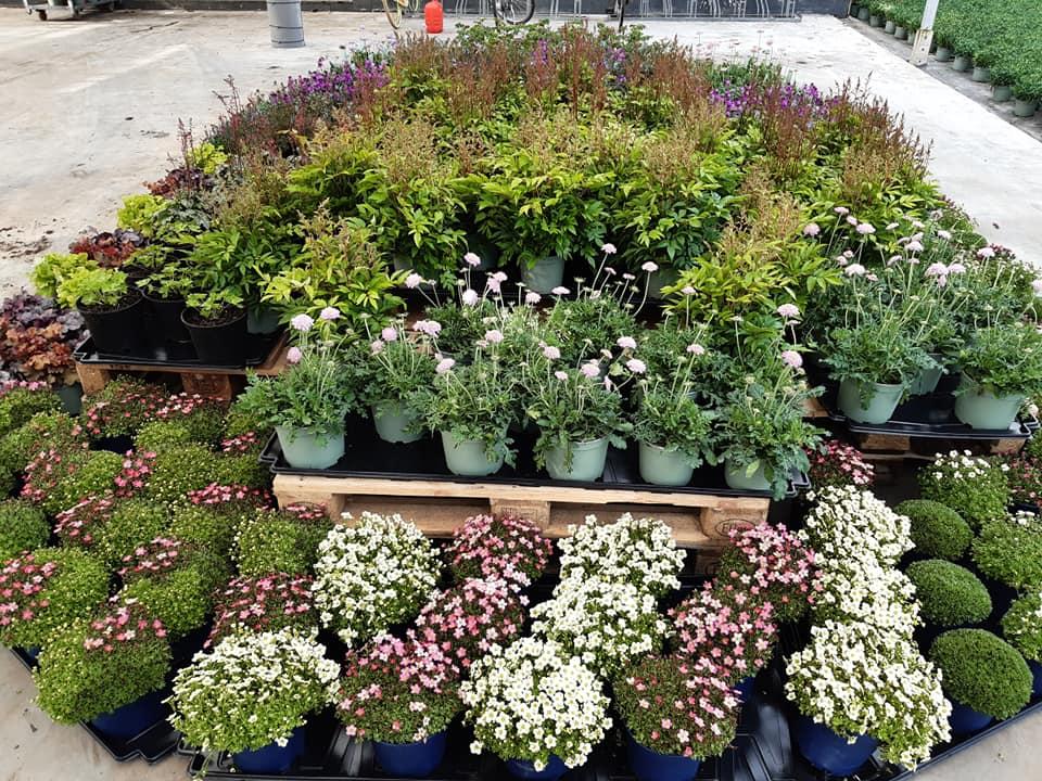 Overzicht van onze vaste tuinplanten